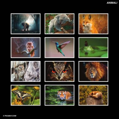 Tema fotografico per calendari con box tipo CD: Animali