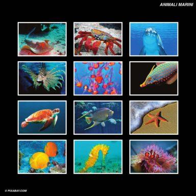 Tema fotografico per calendari con box tipo CD: Animali marini