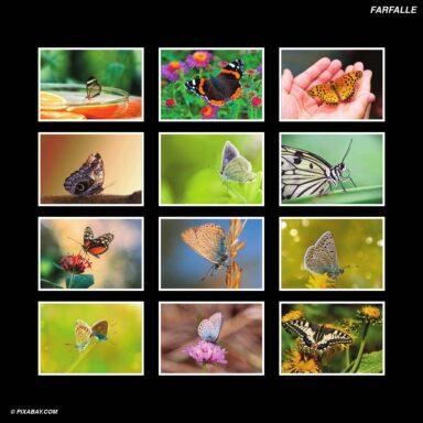 Tema fotografico per calendari con box tipo CD: Farfalle