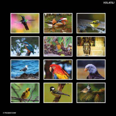 Tema fotografico per calendari con box tipo CD: Volatili